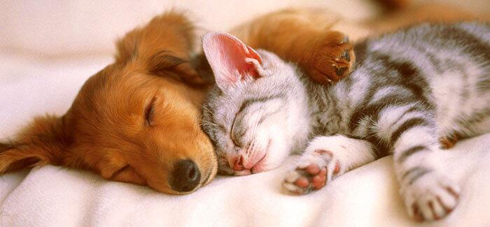 pets for depression